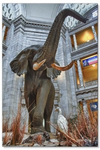 Natural History Museum Elephant